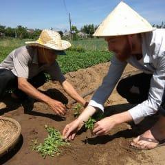 learn Vietnamese gardening basics