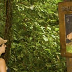 Andes rainforest guacharo