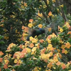 conservation of flora and fauna