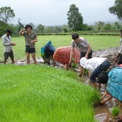 Shahapu Village Tours - farming in India