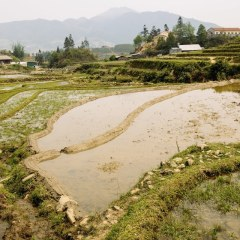 Vietnam rice paddy fields