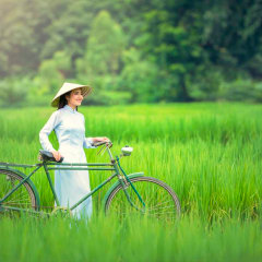 biking Vietnam rice paddy fields