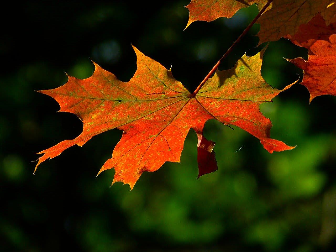 Si sta come d'autunno ma fuori è primavera