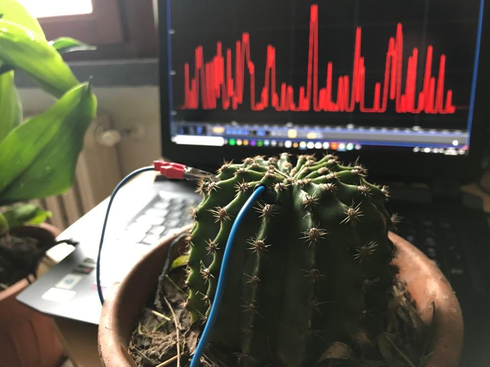 Il musicista che duetta con le piante
