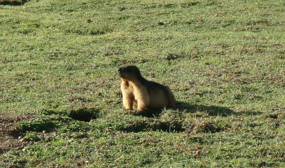 Sembra un eterno giorno della marmotta. Senza la marmotta