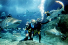 Shark Dive at Melbourne Aquarium - Non-Certified Divers