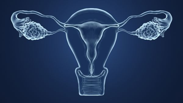 The shape of your vagina may change