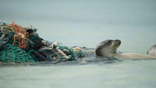 Plastics threaten native species