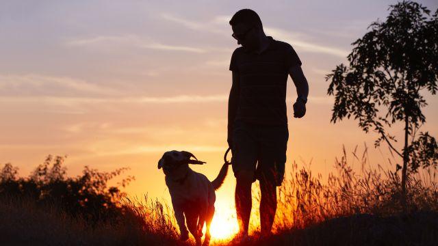 For a Healthier Heart, Take a Walk