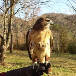 Falconry Package