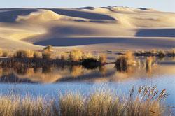 Oregon Dunes by Eric Vaughan