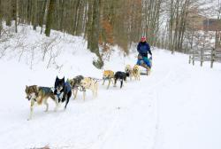 Dog Sledding at Nemacolin Woodlands Resort