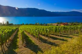 Kelowna - Gray Monk Winery on Lake Country's Scenic Sip Trail