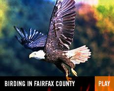 ST - birding in fairfax county