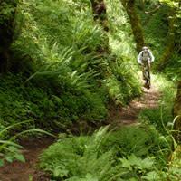 Mountain Biking Tire Mountain Trail, Oakridge by Norman Coyer