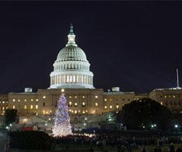 Capitol Christmas Tree