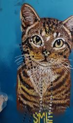 Cat mural by SMiLE in Boulder