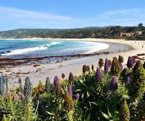 """""""Morning on Carmel Beach"""" photo taken by Judy & Paul"""