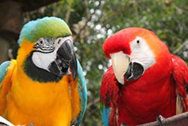 Birds at Chattanooga Zoo