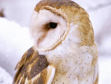 Owl Moon Nature Trail Tours