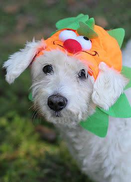Doggie Howl-O-Ween