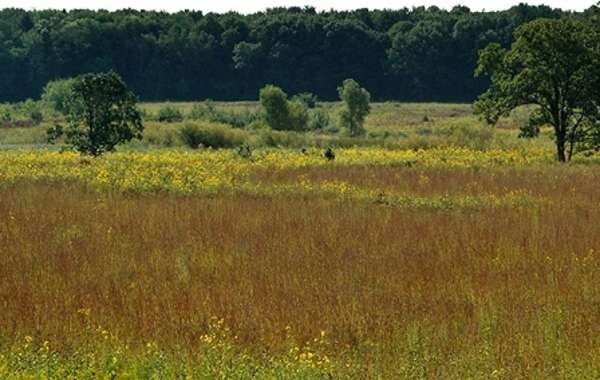 UW-Madison Arboretum Family Nature Program: The Blooming Prairie.
