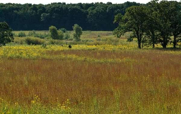 UW-Madison Arboretum Family Walk: Mud.