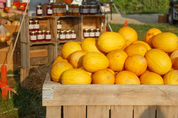 Squash at Howard County Fair Farmers Market