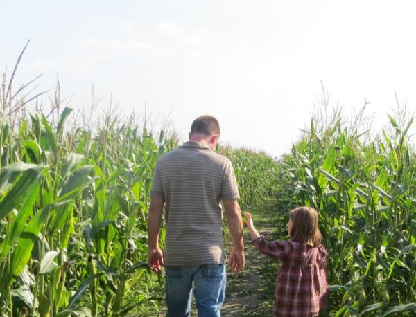 Kuehnert Dair Farm Corn Maze