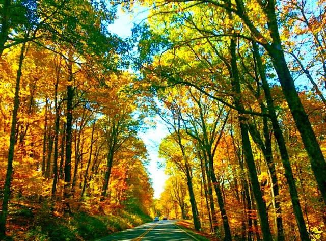Driving Through Fall Colors - Fall Photo