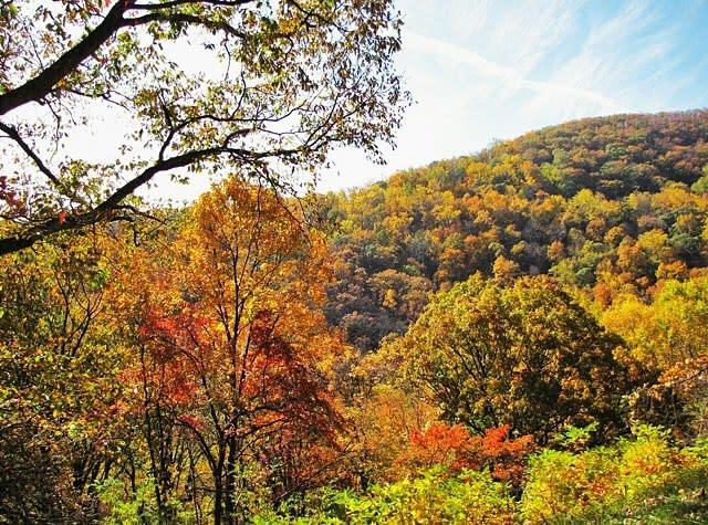 Mountain of Fall Color - Fall Photo