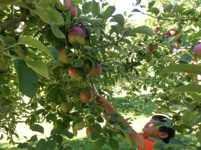Rocky Brook Orchard