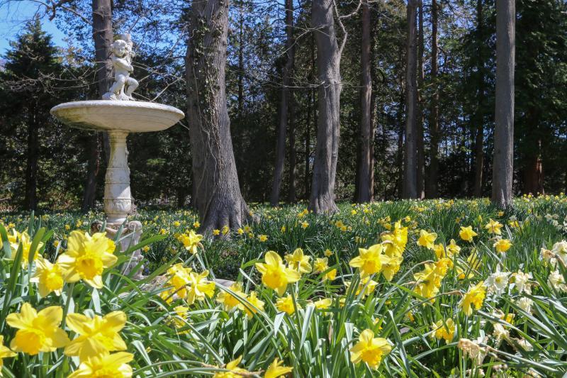 Blithewold Daffodil Days 2016