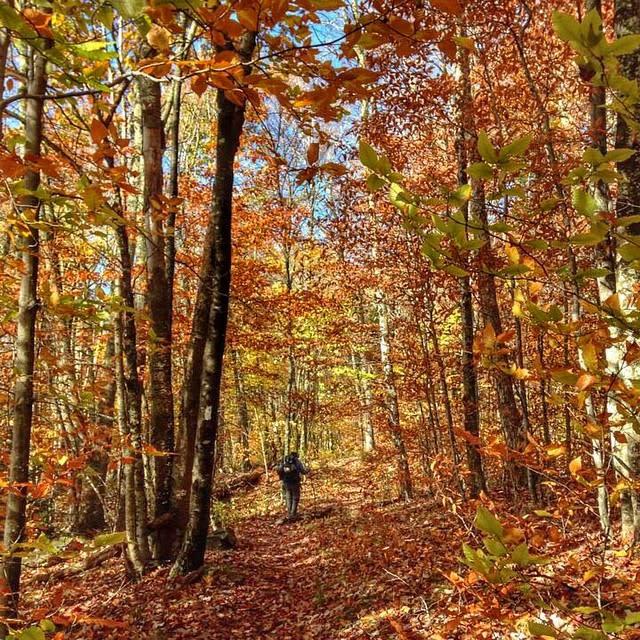 Fall Colorful Trail - Fall Photo
