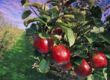 Orchard Tours