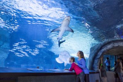 Newport Aquarium Sharks