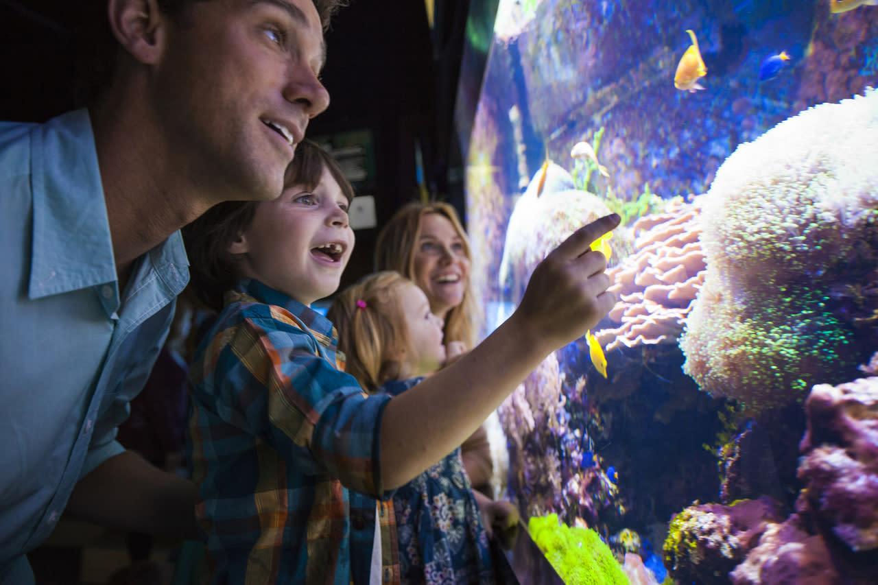Fish aquarium in niagara falls - 701 Whirlpool Street Niagara Falls