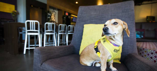 Pet Friendly Finds: Aloft 2