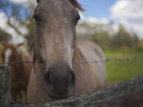 Horse at Taylor Ranch