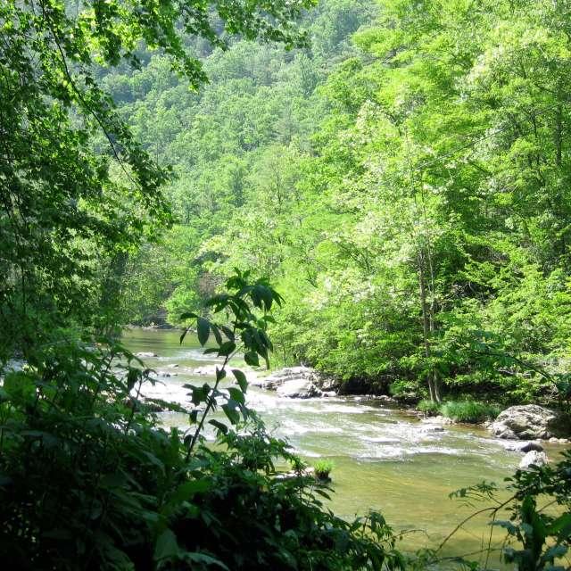 Hiking Trail: Laurel River