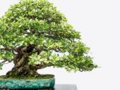 5th Annual U.S. National Bonsai Exhibition
