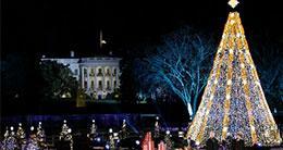 National Christmas Tree - DC Holiday Traditions