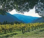 Carmel Valley: Wine