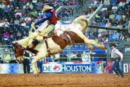 Livestock Show & Rodeo