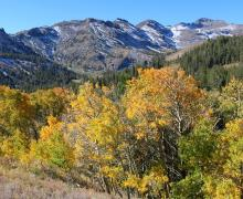 Sonora Pass Fall Colors