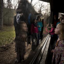 Omaha's Henry Doorly Zoo & Aquarium - Hubbard Gorilla Valley