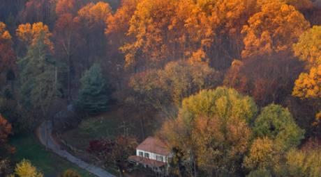 Fall Foliage - Unique Ways