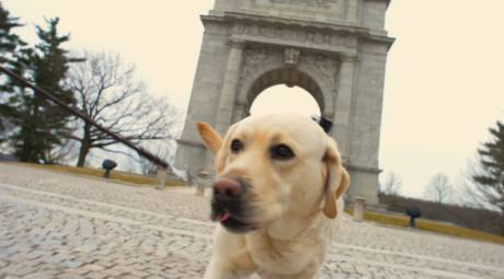Attractions - Pet Friendly - Valley Forge