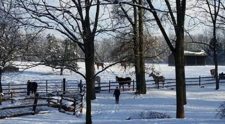 Outdoor Winter Activities - Horseback Rides