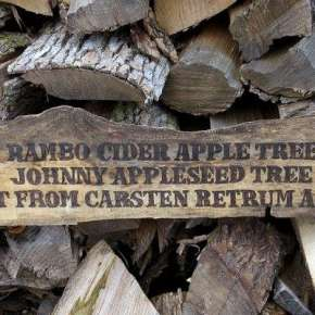 Rambo apple tree - clearer pic